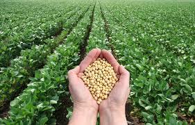 Glyphosate - GMO Soybeans